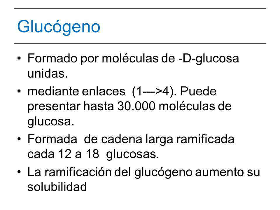 Glucógeno Formado por moléculas de -D-glucosa unidas.