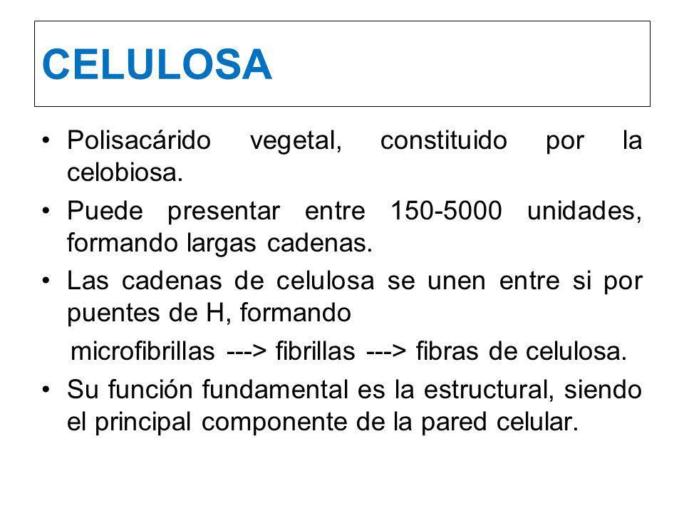 CELULOSA Polisacárido vegetal, constituido por la celobiosa.
