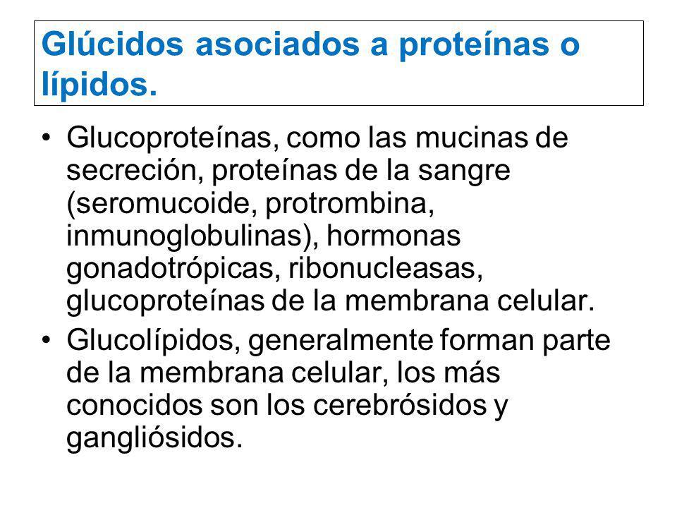 Glúcidos asociados a proteínas o lípidos.