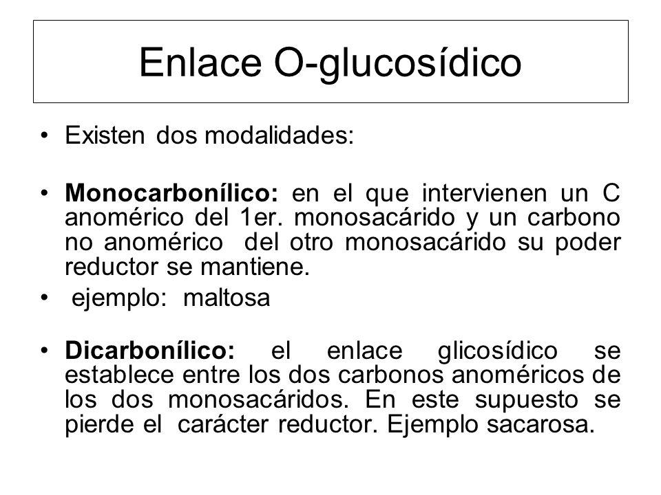 Enlace O-glucosídico Existen dos modalidades: