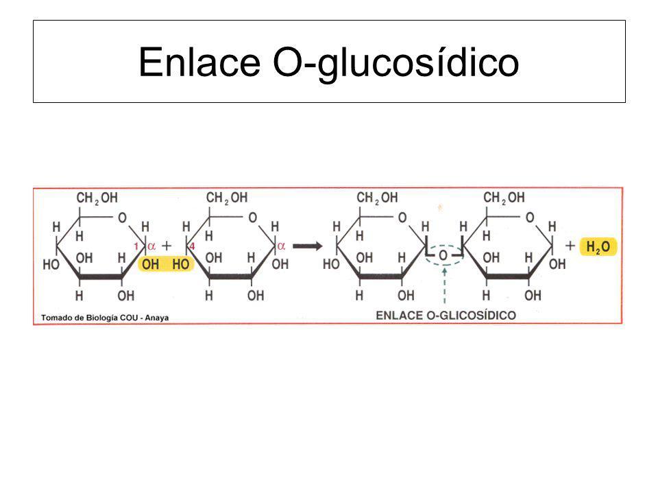 Enlace O-glucosídico