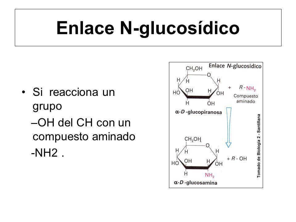 Enlace N-glucosídico Si reacciona un grupo