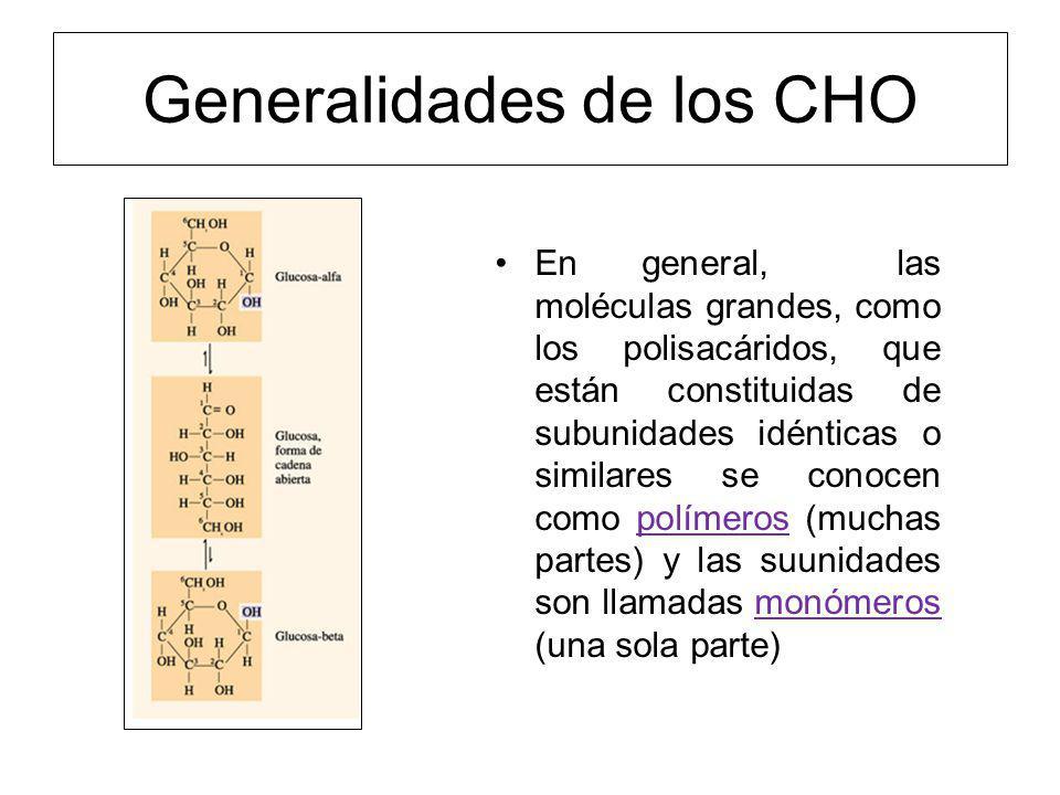 Generalidades de los CHO