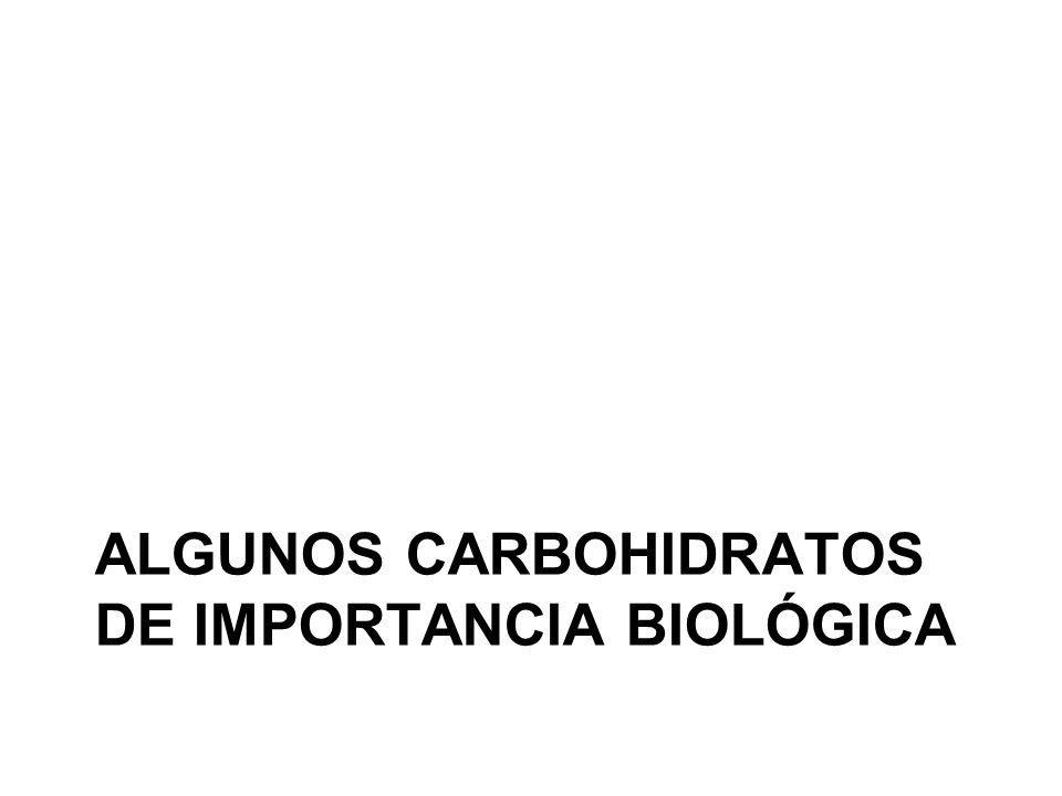 Algunos Carbohidratos de importancia biológica