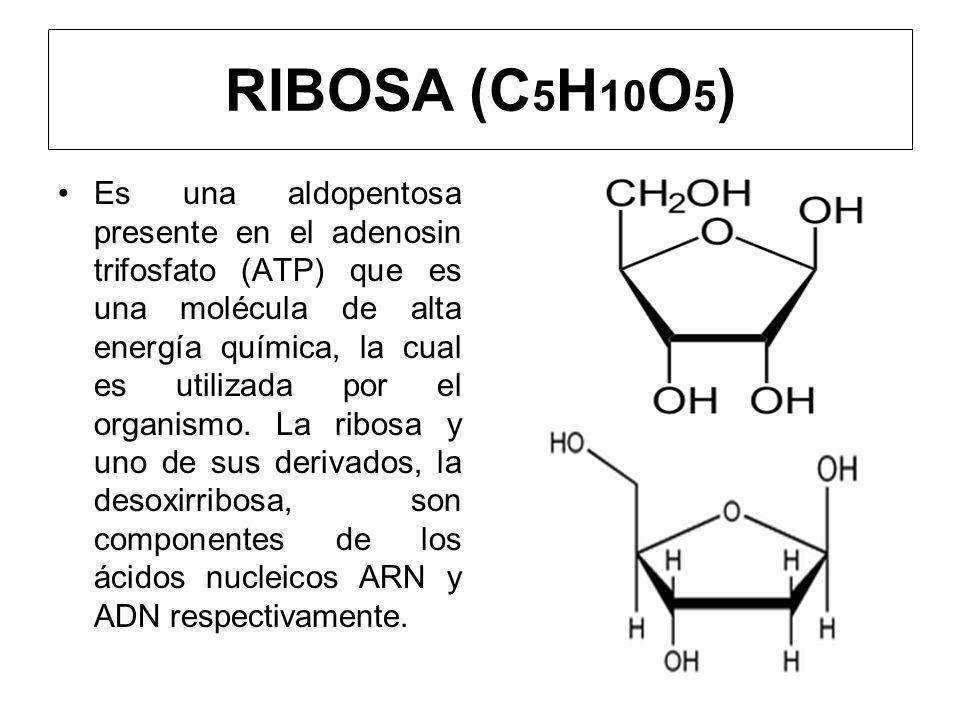 RIBOSA (C5H10O5)