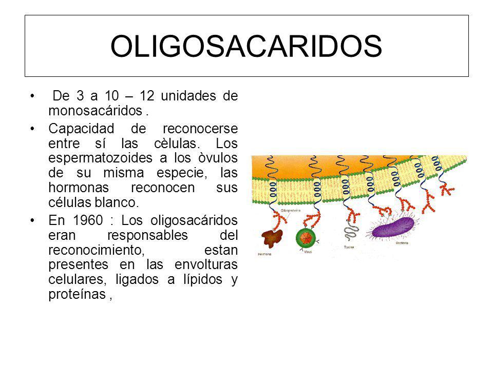 OLIGOSACARIDOS De 3 a 10 – 12 unidades de monosacáridos .