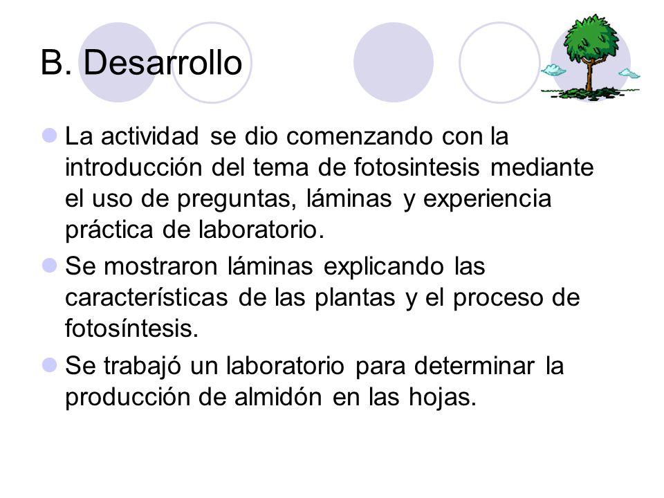 B. Desarrollo