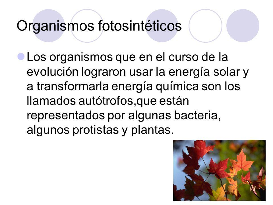 Organismos fotosintéticos