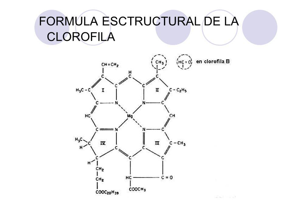 FORMULA ESCTRUCTURAL DE LA CLOROFILA