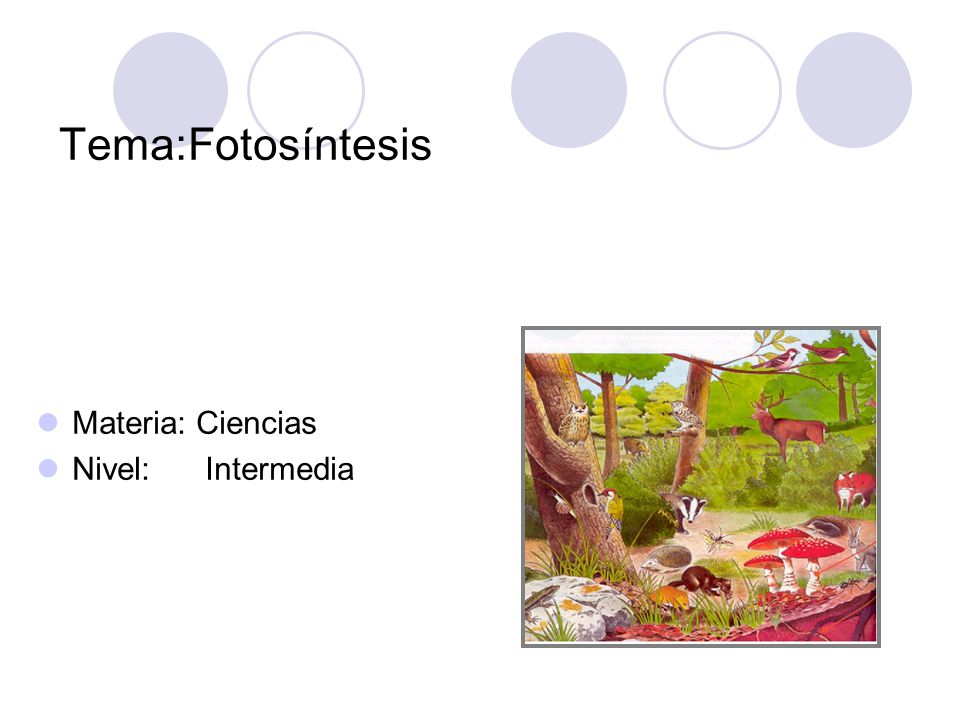 Tema:Fotosíntesis Materia: Ciencias Nivel: Intermedia