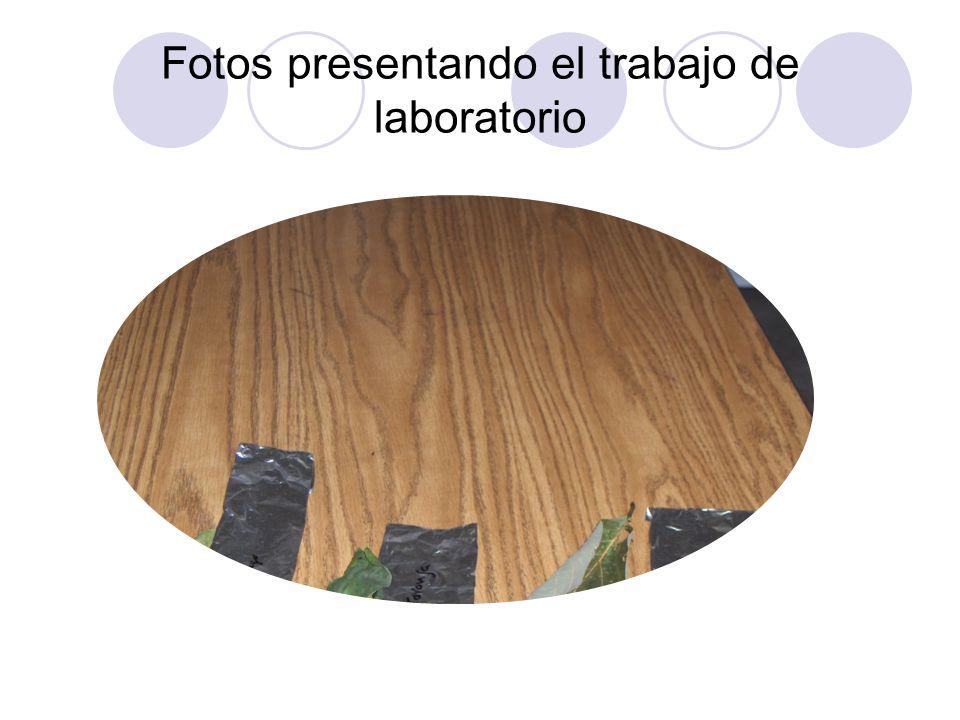 Fotos presentando el trabajo de laboratorio