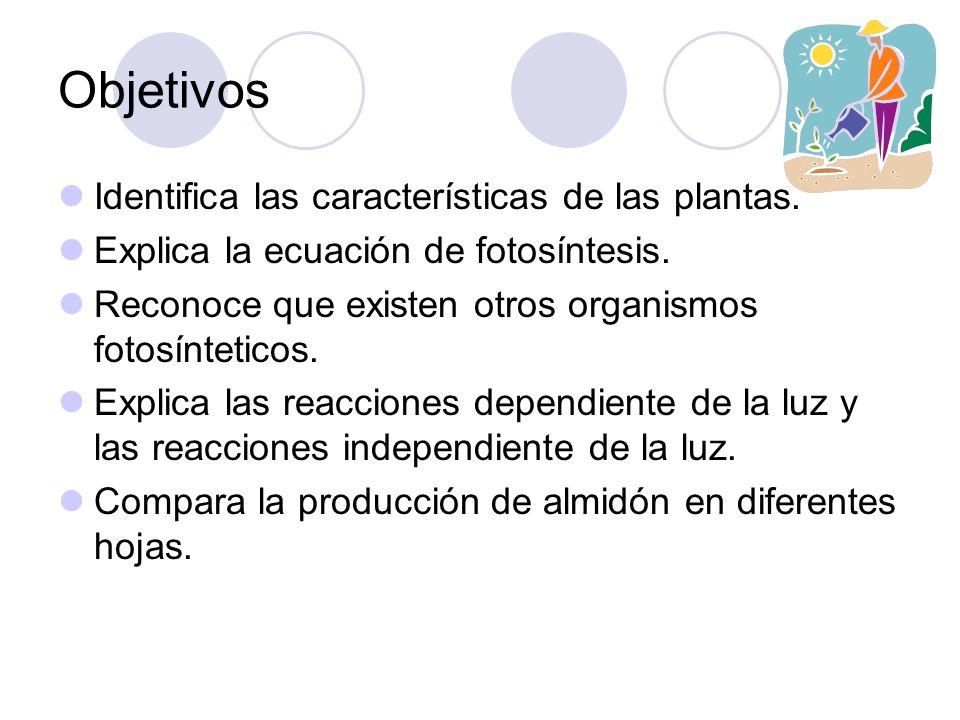 Objetivos Identifica las características de las plantas.