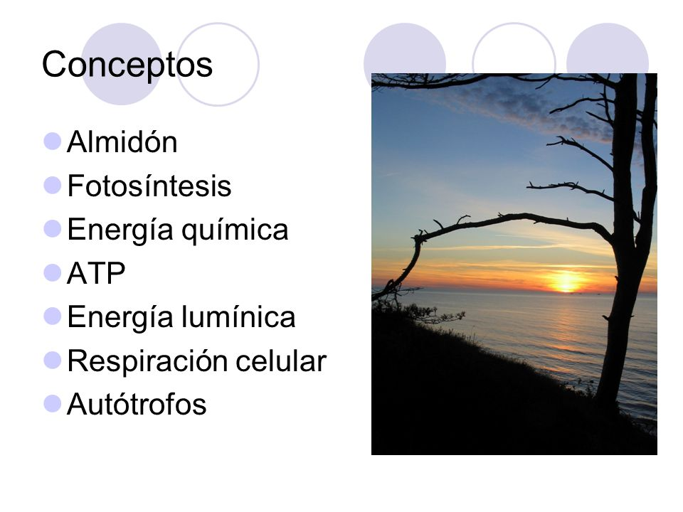Conceptos Almidón Fotosíntesis Energía química ATP Energía lumínica