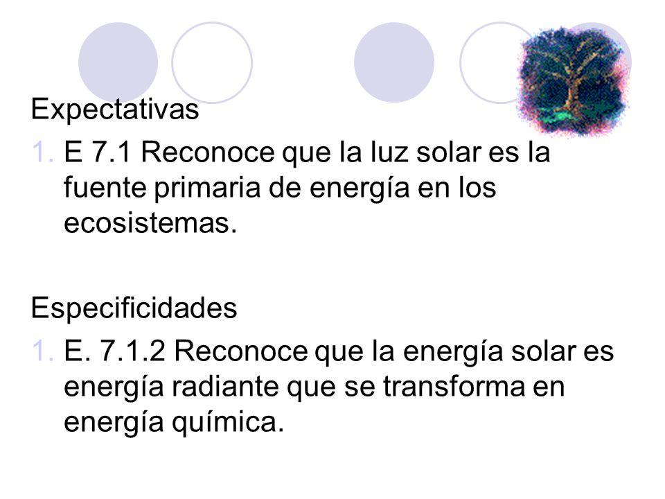 Expectativas E 7.1 Reconoce que la luz solar es la fuente primaria de energía en los ecosistemas. Especificidades.