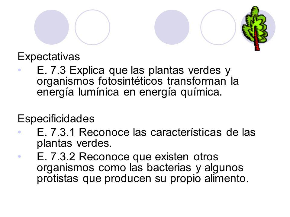 Expectativas E. 7.3 Explica que las plantas verdes y organismos fotosintéticos transforman la energía lumínica en energía química.