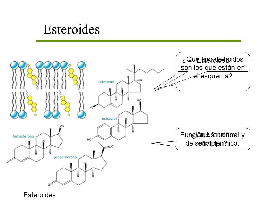 Esteroides ¿Qué tipo de lípidos son los que están en el esquema