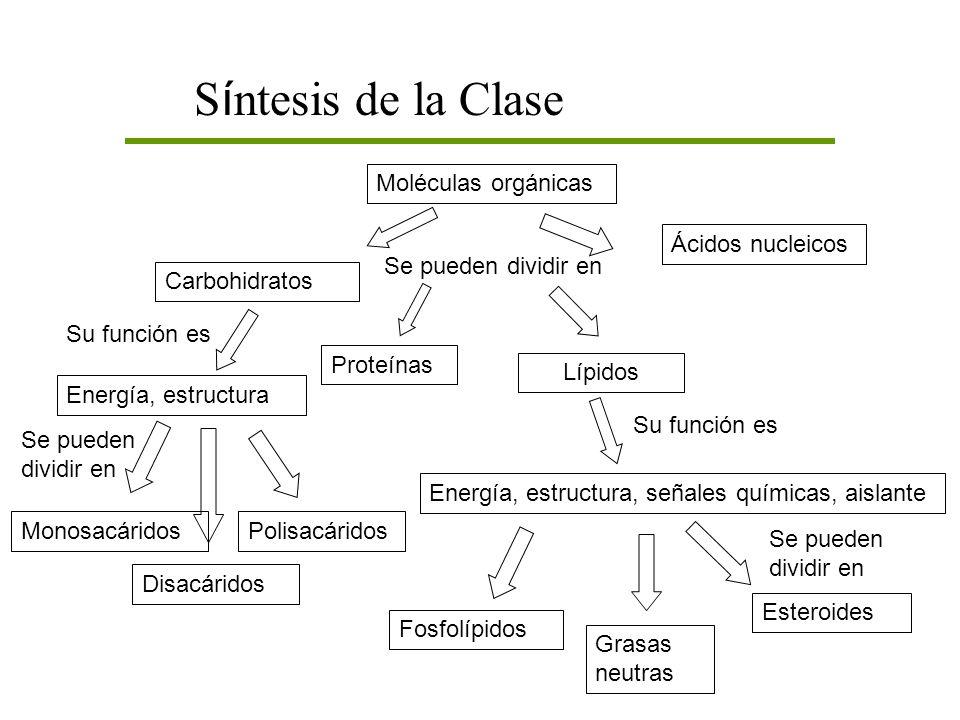 Síntesis de la Clase Moléculas orgánicas Ácidos nucleicos