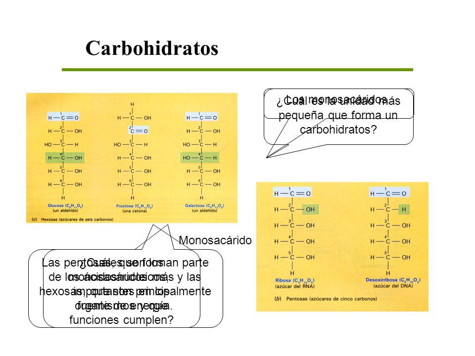 ¿Cuál es la unidad más pequeña que forma un carbohidratos