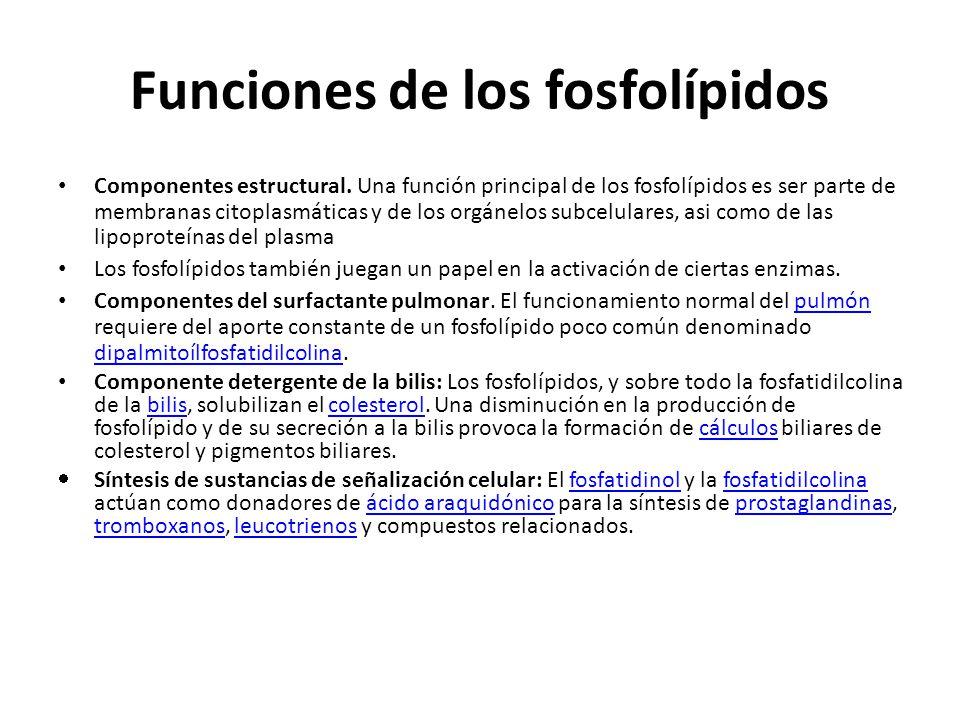 Funciones de los fosfolípidos