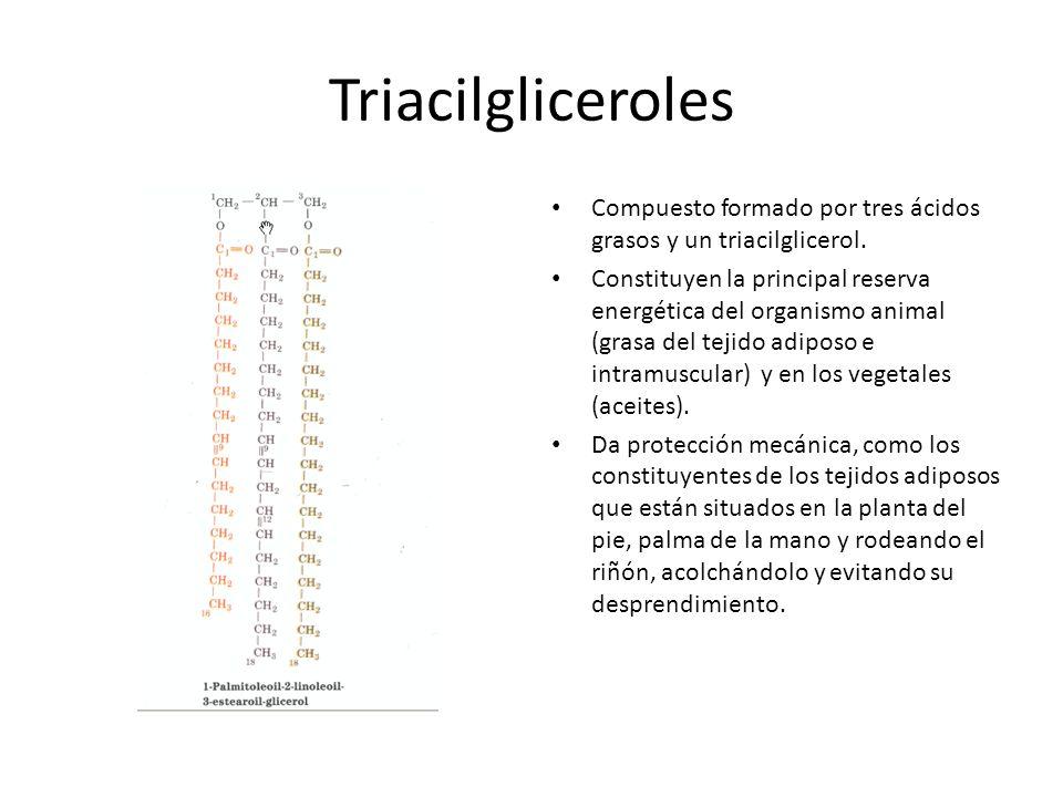 Triacilgliceroles Compuesto formado por tres ácidos grasos y un triacilglicerol.