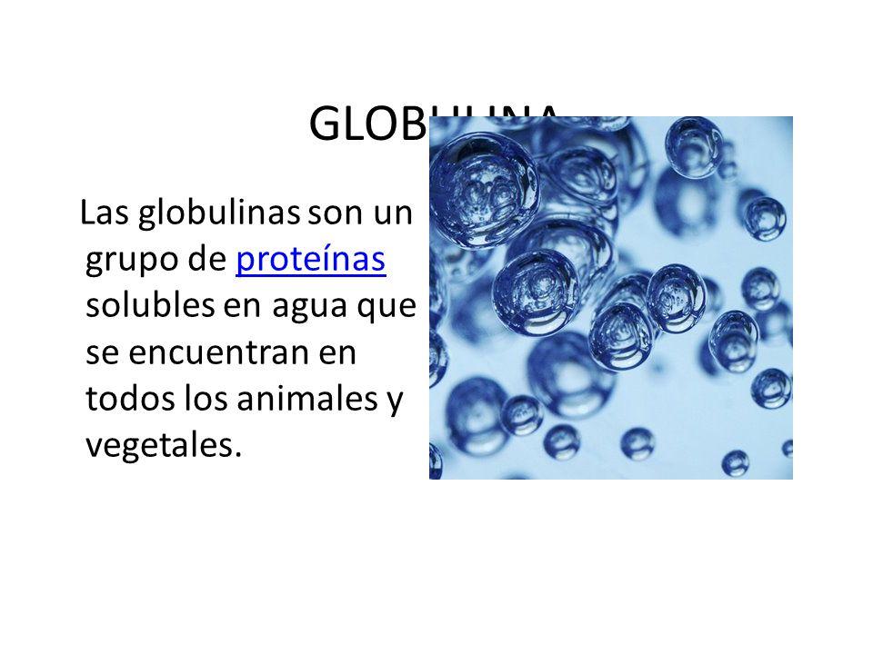 GLOBULINA Las globulinas son un grupo de proteínas solubles en agua que se encuentran en todos los animales y vegetales.