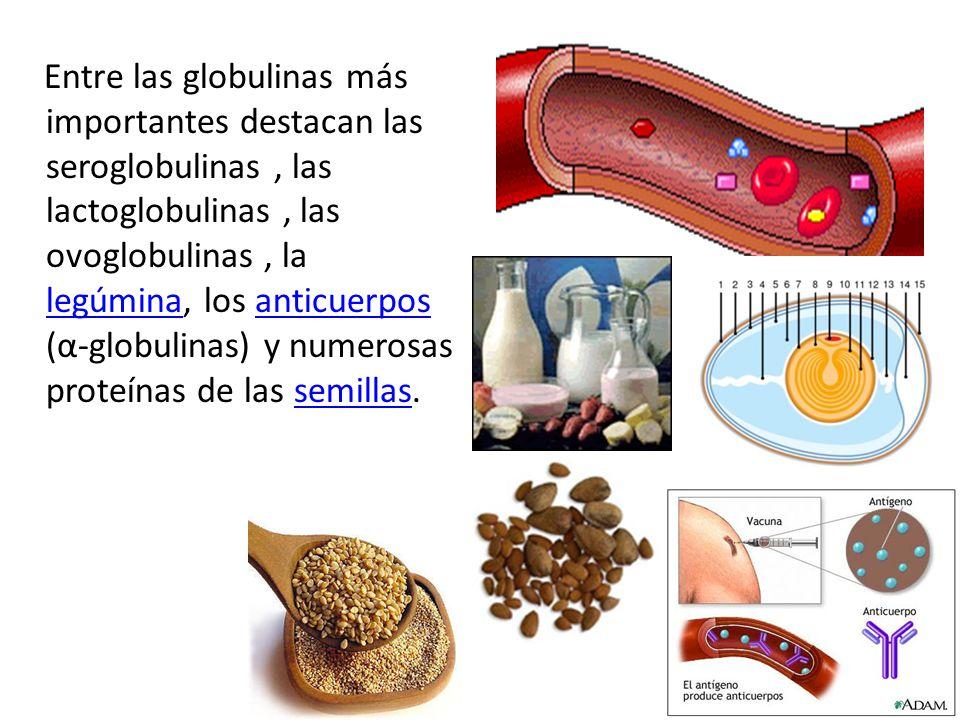 Entre las globulinas más importantes destacan las seroglobulinas , las lactoglobulinas , las ovoglobulinas , la legúmina, los anticuerpos (α-globulinas) y numerosas proteínas de las semillas.