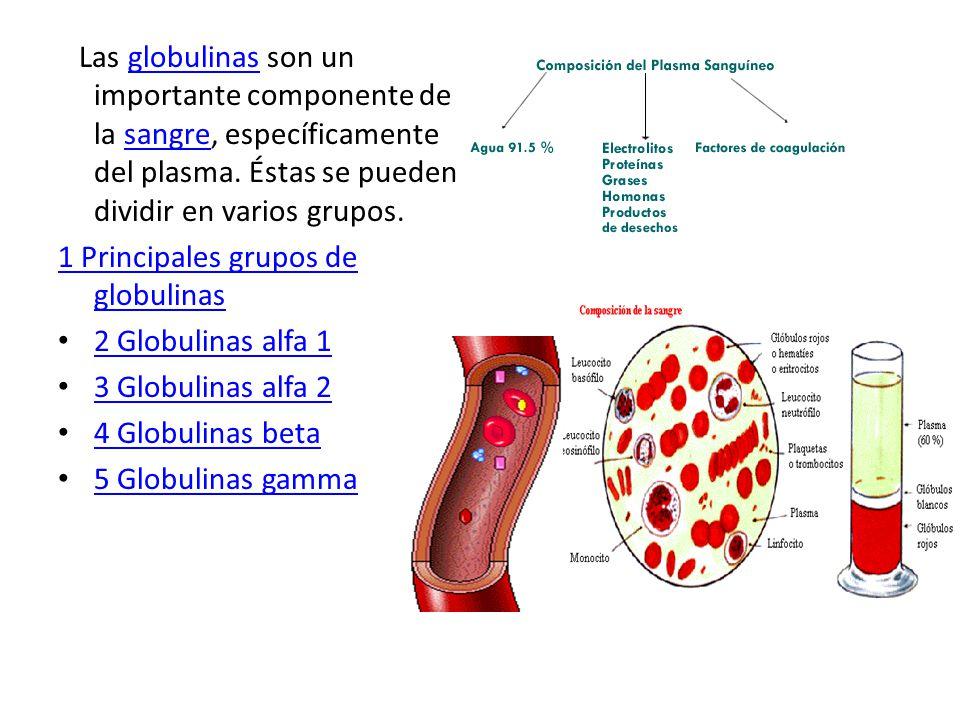 Las globulinas son un importante componente de la sangre, específicamente del plasma. Éstas se pueden dividir en varios grupos.