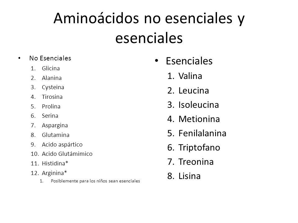 Aminoácidos no esenciales y esenciales