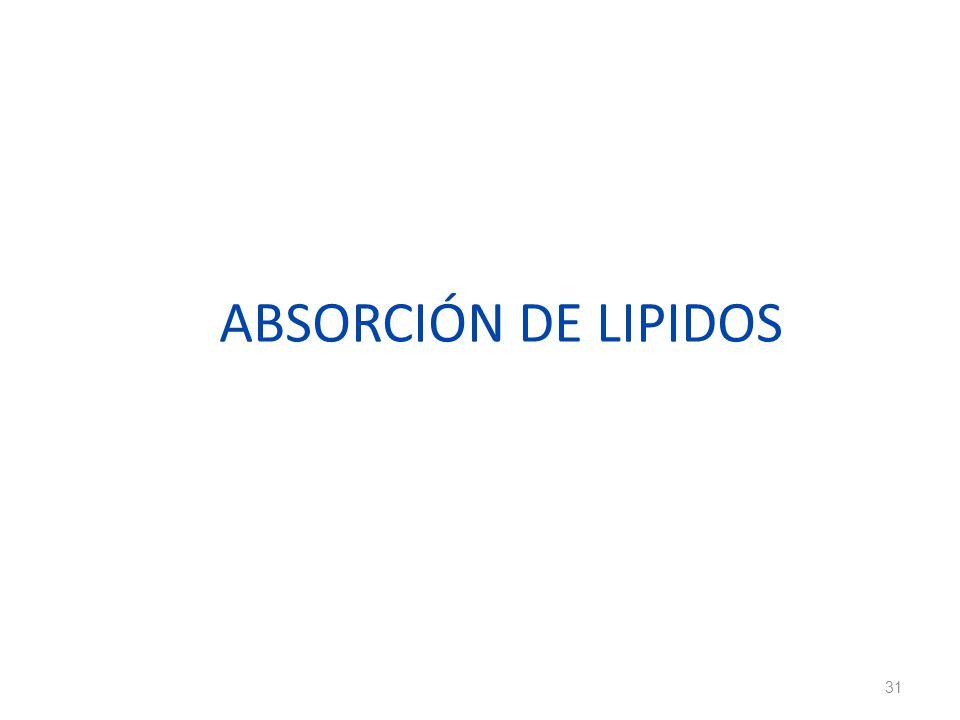 ABSORCIÓN DE LIPIDOS