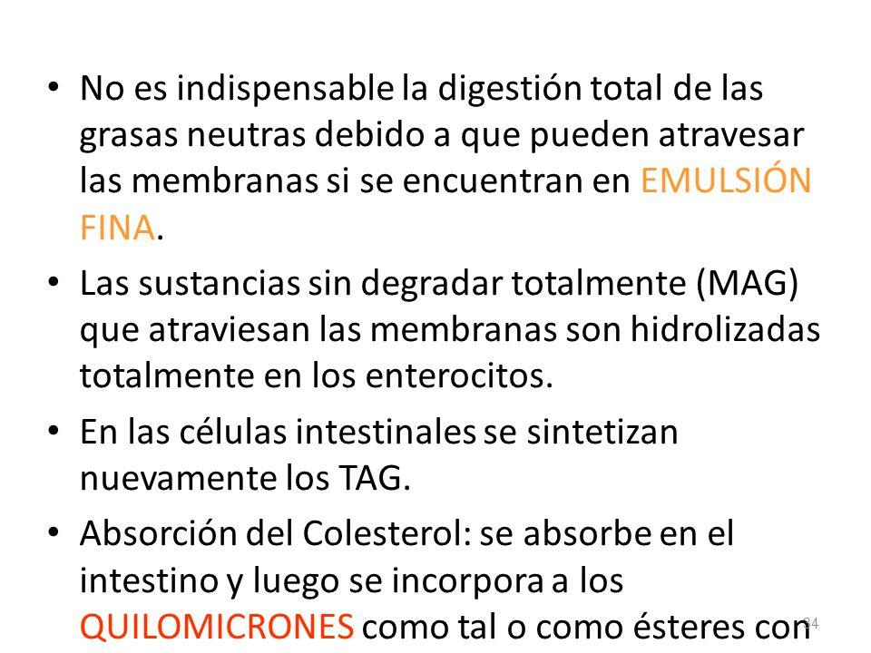 No es indispensable la digestión total de las grasas neutras debido a que pueden atravesar las membranas si se encuentran en EMULSIÓN FINA.