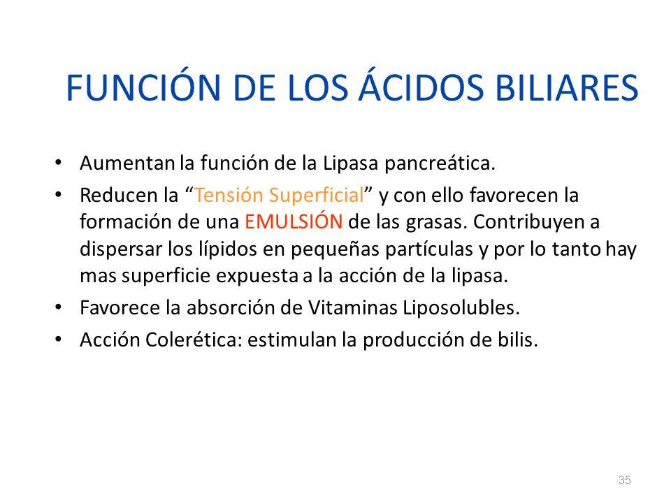 FUNCIÓN DE LOS ÁCIDOS BILIARES
