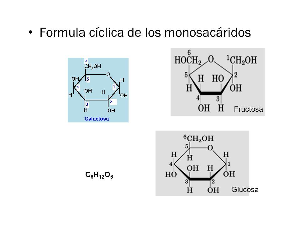 Formula cíclica de los monosacáridos