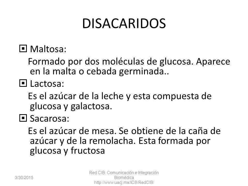 DISACARIDOS Maltosa: Formado por dos moléculas de glucosa. Aparece en la malta o cebada germinada..