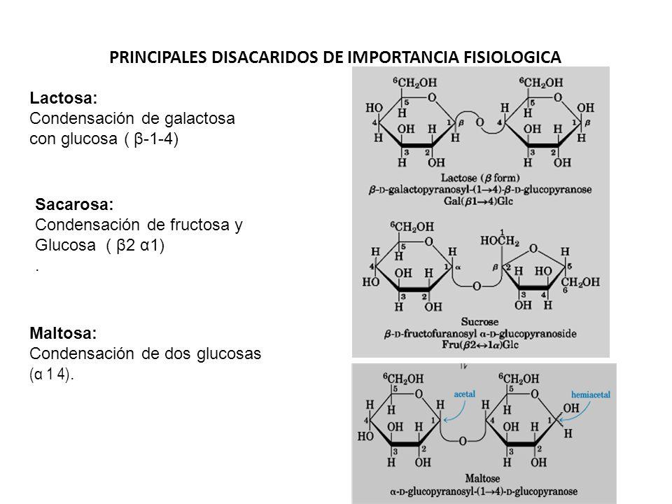 PRINCIPALES DISACARIDOS DE IMPORTANCIA FISIOLOGICA