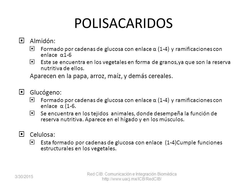 POLISACARIDOS Almidón: