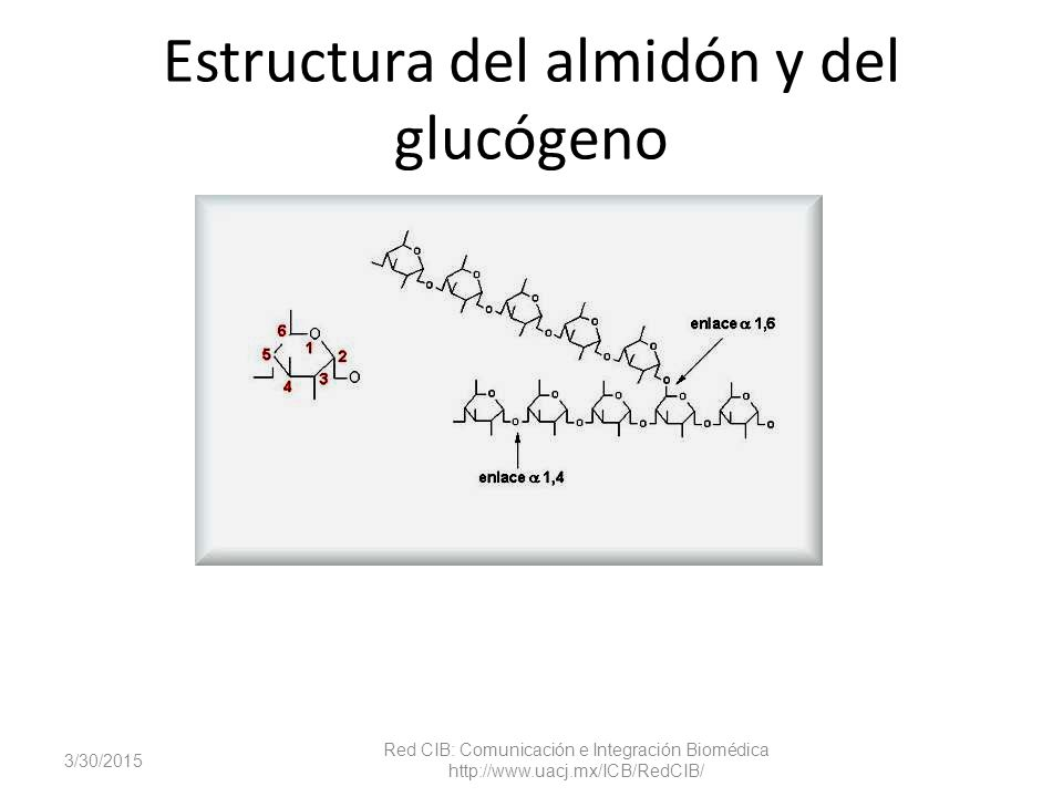Estructura del almidón y del glucógeno