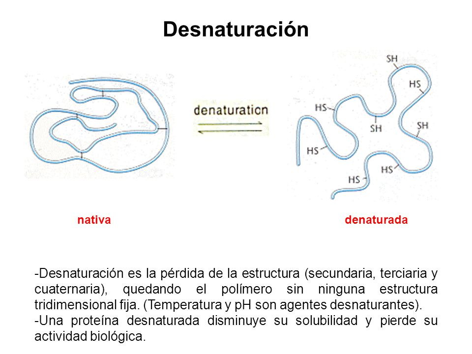 Desnaturación nativa. denaturada.