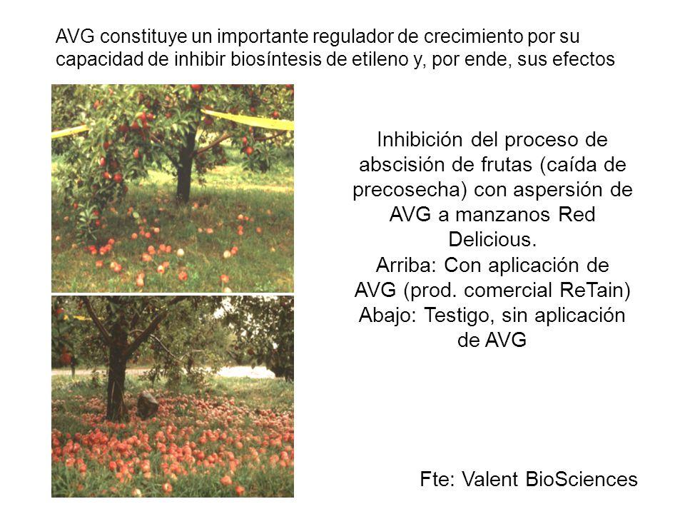 Inhibición del proceso de abscisión de frutas (caída de