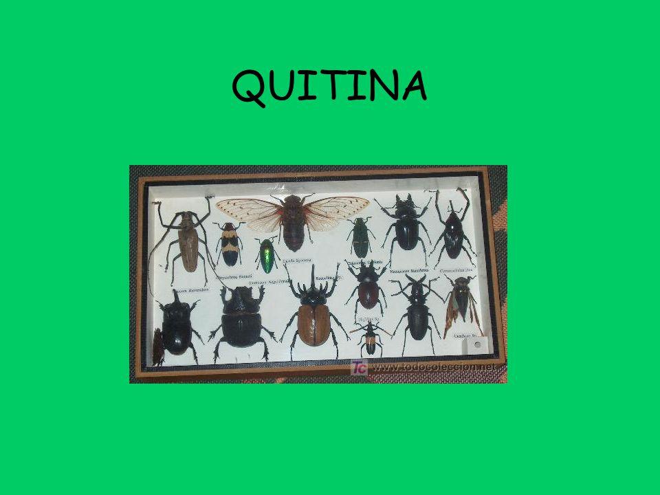 QUITINA