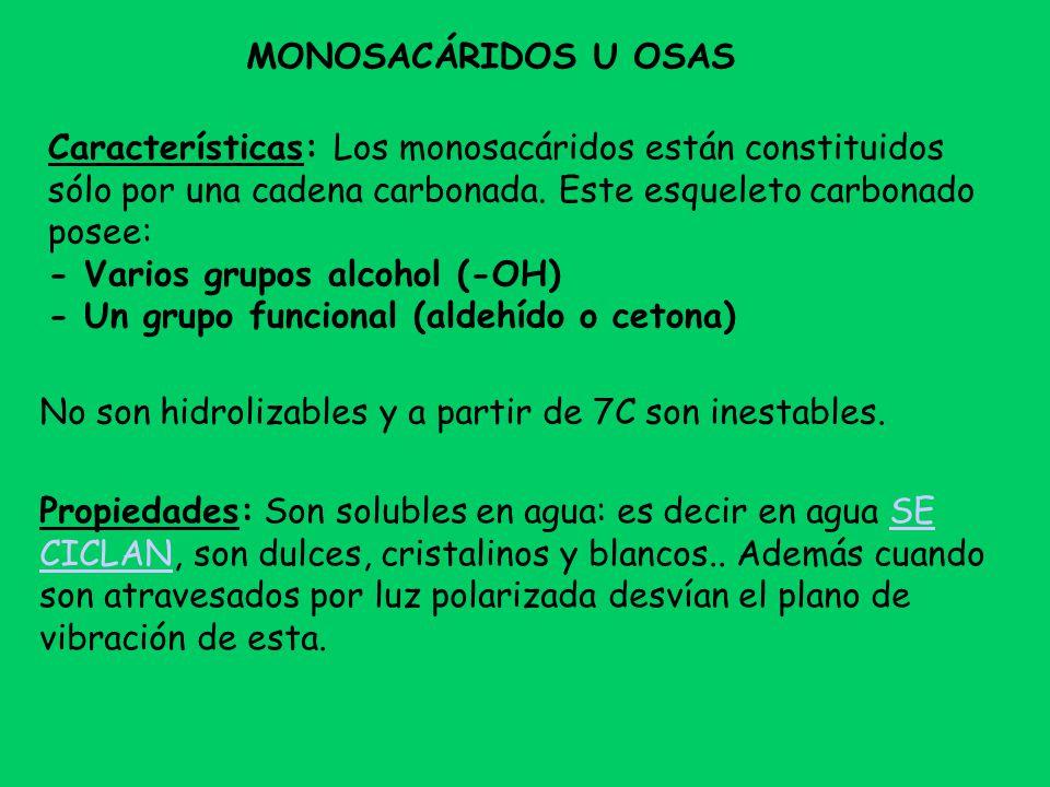 MONOSACÁRIDOS U OSAS Características: Los monosacáridos están constituidos sólo por una cadena carbonada. Este esqueleto carbonado posee: