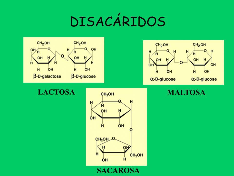 DISACÁRIDOS LACTOSA. MALTOSA.