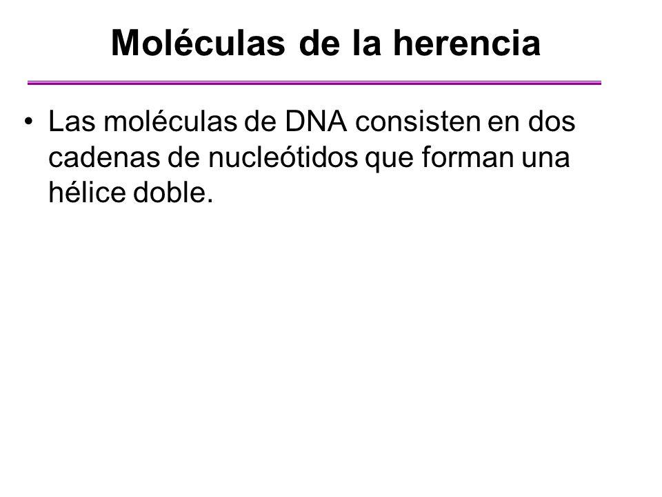 Moléculas de la herencia