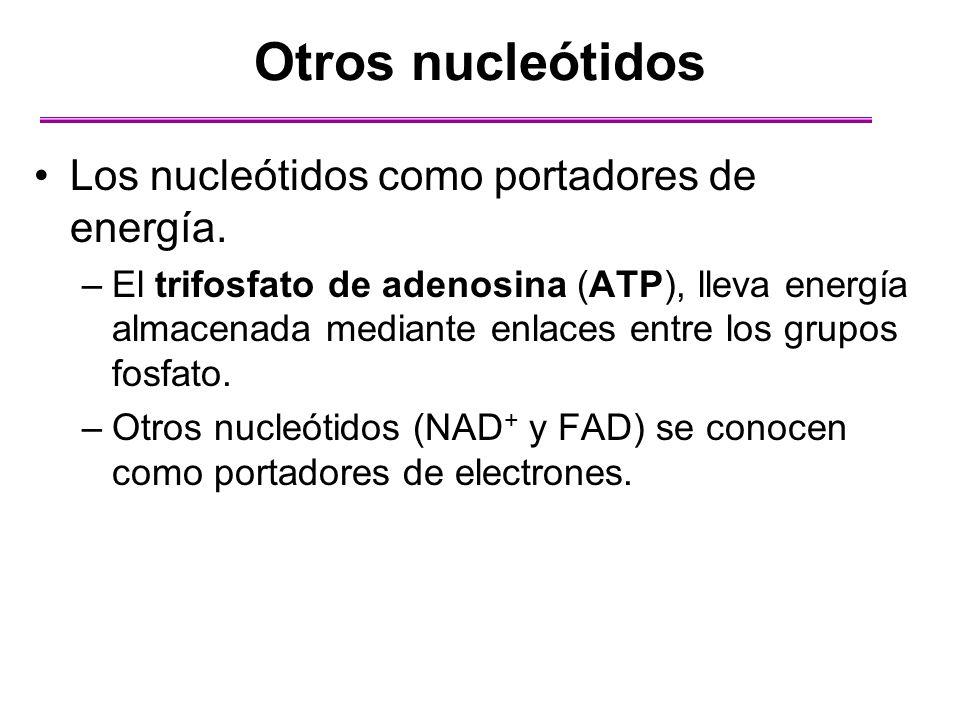 Otros nucleótidos Los nucleótidos como portadores de energía.