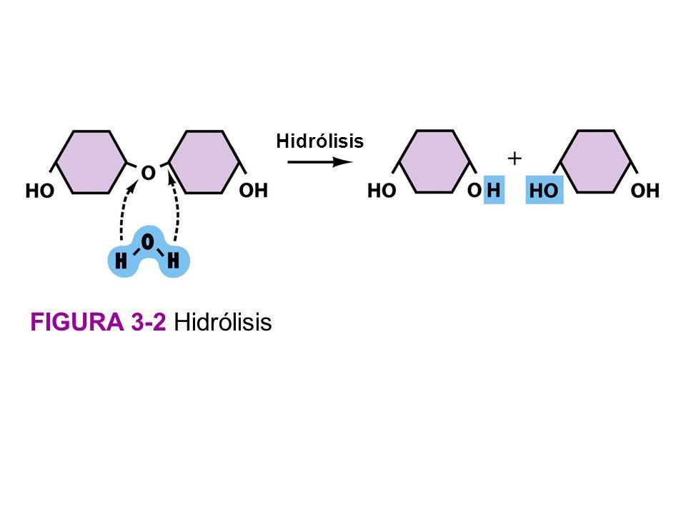 Hidrólisis FIGURA 3-2 Hidrólisis figura 3-2 Hidrólisis