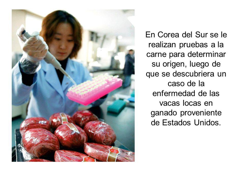 En Corea del Sur se le realizan pruebas a la carne para determinar su origen, luego de que se descubriera un caso de la enfermedad de las vacas locas en ganado proveniente de Estados Unidos.
