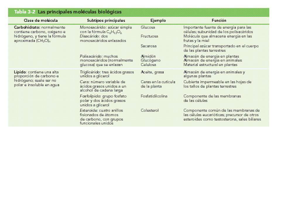 Tabla 3-2 (parte 1) Las principales moléculas biológicas