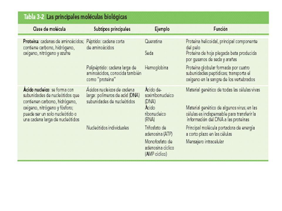 Tabla 3-2 (parte 2) Las principales moléculas biológicas
