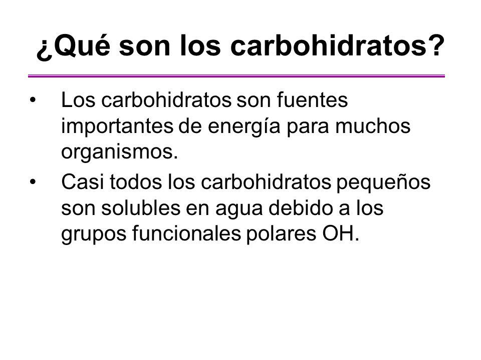 ¿Qué son los carbohidratos