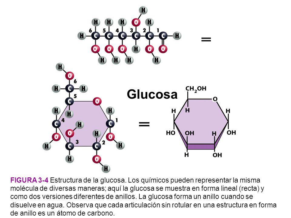 Glucosa Figura 3-4 Estructura de la glucosa.