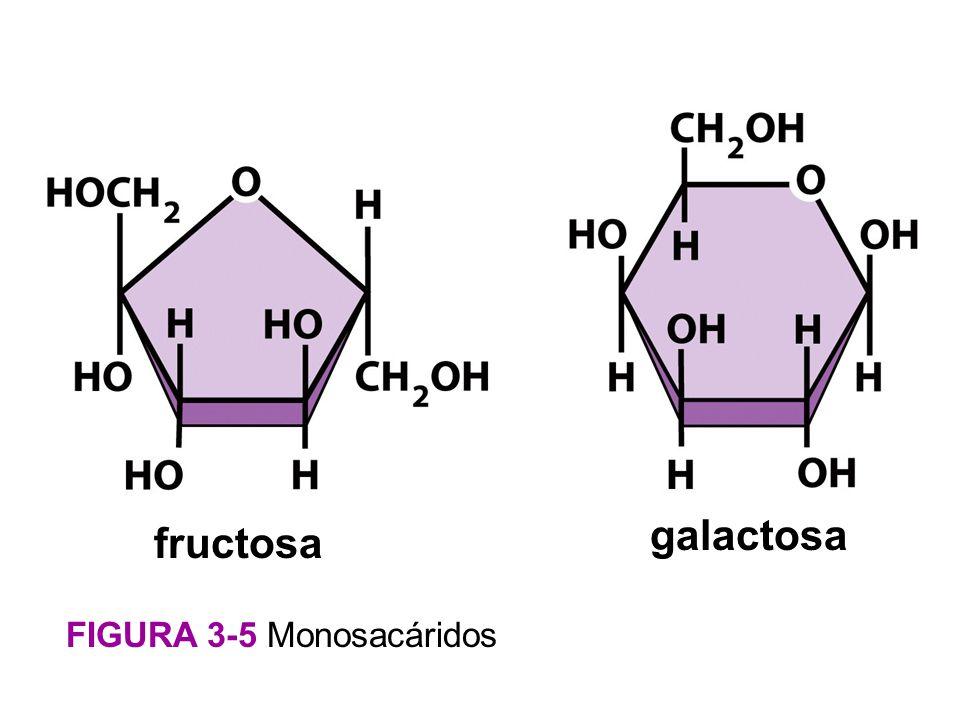 Figura 3-5 Monosacáridos